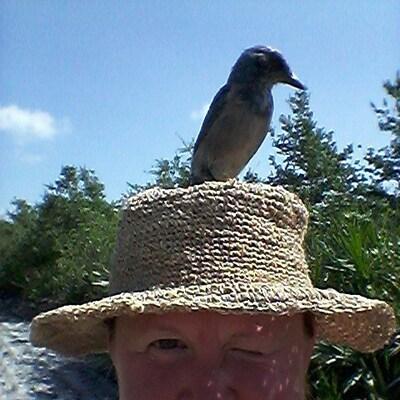 peacebird