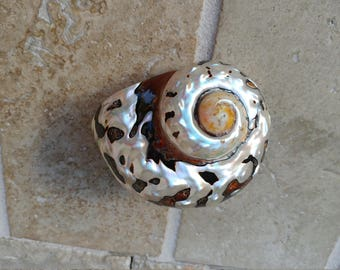 Smarticus - Polished Seashell - Pearlized Black and Orange Turbo - African Smarticus Seashell 218