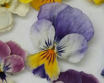 Dry Violas, Dry Flowers, Purple, Yellow, Real, Wedding Confetti, Decoration, Table Decoration, Centerpiece, Viola, Craft Supply, 50 Violas
