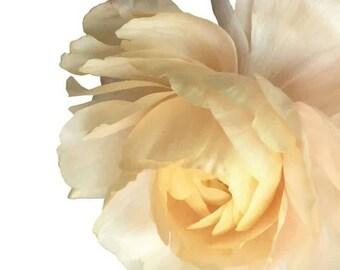 Light Yellow Garden Rose - Vinyl Decal Wall Décor