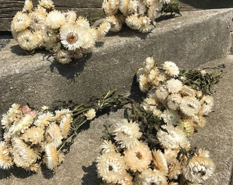 5 bunches white Strawflowers -dried flowers