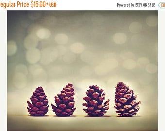 Nature Photography: Pine Cones Fine Art Winter Nature Photography nature photos botanical art prints Still life Photography Bokeh Blue