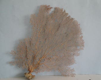 "11.2"" x 13"" Natural Red Color Sea Fan Seashells Reef Coral"