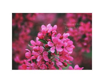 Crap Apple Tree Blossoms. Pink Nature Photography. Spring Floral Art. Magenta. Flowers. Nature Wall Art
