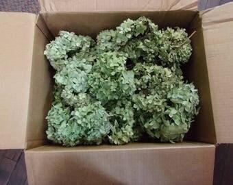 Box Of Green Dried Hydrangea