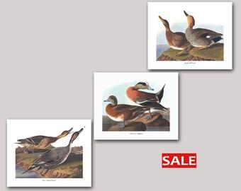 Duck Art Set of 3 Prints - American Widgeon Duck Art, Pin Tailed Duck Art, Galdwall Duck Art (Audubon Dabbling Duck Prints, Bird Decor) SALE