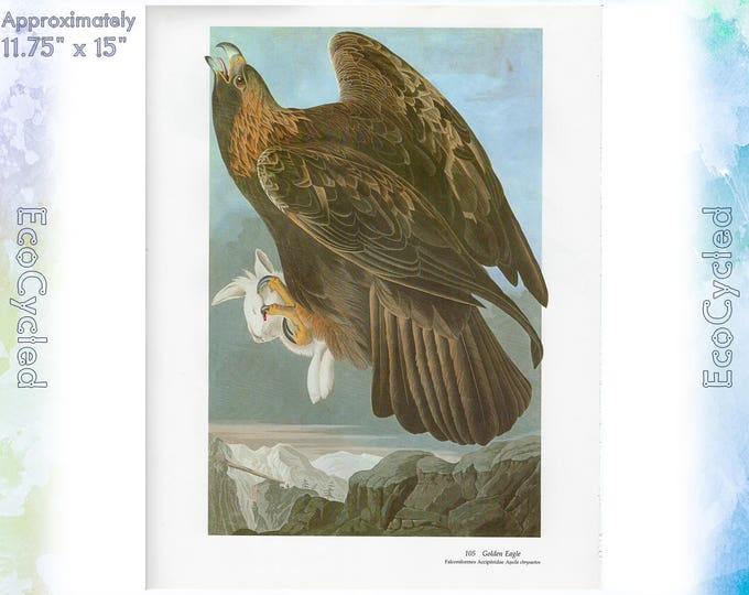Golden Eagle & Harris Hawk Birds of America Vintage Art Print Nature Paper Ephemera John James Audubon Baby Elephant Folio frameable 59