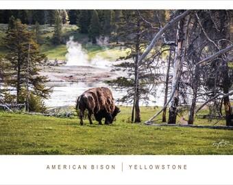 Yellowstone Bison 10x20