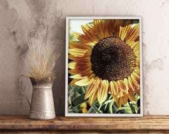 Sunflower Photograph | Digital Download Printable Art | Home Decor | Art You Print At Home | Instant Download TIF File | Digital Prints |Art