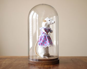 Real Anthropomorphic Rat Taxidermy with Star Dress, Bracelet, and Glass Dome
