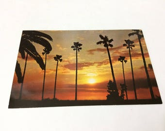 California Sunset Vintage Color Postcard Native Palm Trees