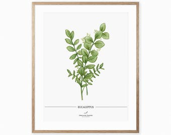 Art print with eucalyptus, botanical and vintage print, illustration by Joannie Houle