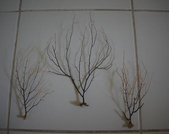 Set of 3 Sea Trees
