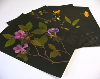 Black Botanicals --Add a Black Background to Any Botanical Print!