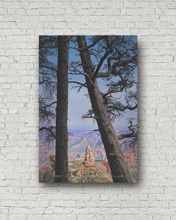 Grand Canyon Photo | North Rim Grand Canyon Art | Arizona Nature Photo | Tree Nature Art | POV Landscape Photo | Landscape Photography Art