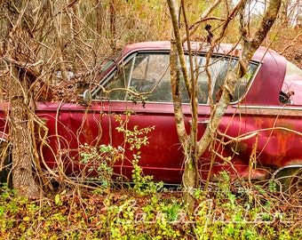 1964 Red Plymouth Barracuda in the Woods Photograph