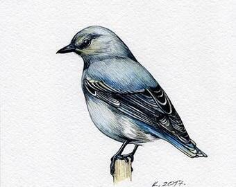 Mountain Bluebird, Birds, Watercolor Original Painting Art, Quick sketch