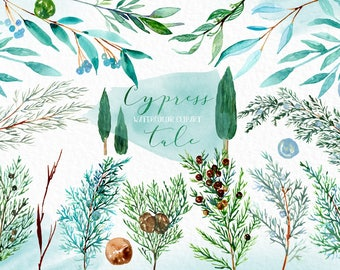 Cypress Watercolor clip art hand drawn. Winter watercolor, light green, mintr green branches, wedding invitation, wreath and arrangements.