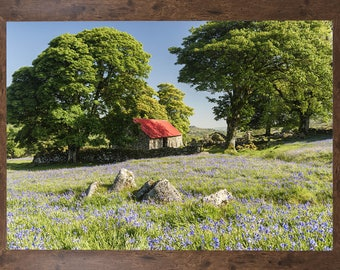 Bluebell print, bluebell field print, country scene with bluebells photo, LIMITED EDITION Print, Emsworthy Mire Print, dartmoor,