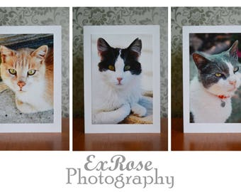 Pack of 3 Charity Cat Greetings Cards