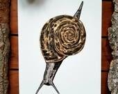 A5 Snail Illustration Print