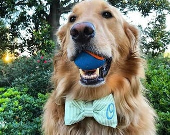Dog Bow Tie Green Seersucker || Personalized Preppy Bowtie || Custom Gift by Three Spoiled Dogs