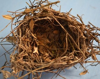 Bird Nest With Trash, Natural Curio Twigs Branches Woodlands, Leaves Pine  Needles Vines Abandoned