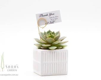 Succulent Favours in Stripy Ceramic Pots, Wedding Succulent Bombonieres, Sydney Corporate Gift, Succulent Gifts Event, Minimum Order: 20