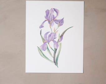 "Iris Watercolor Artprint 8""x10"""
