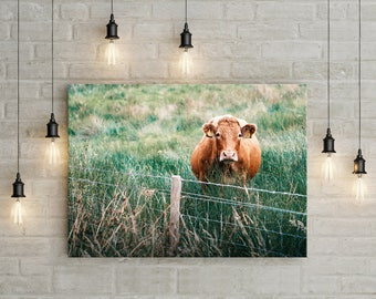 Scottish Cow Fine Art Photography Print - Best Selling Print - DIGITAL INSTANT DOWNLOAD - Scottish Decor, Photography Print
