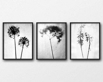 Best Selling Item Set of 3 Prints, Black and White Photography, Botanical Photo Print Set, Plant Prints, Bohemian Style Wall Art Prints