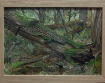 Fallen Tree - Salcey Forrest