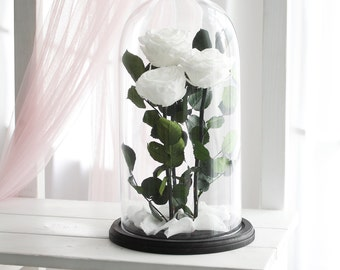Three Beauty and the beast rose (Huge), Enchanted Rose, Rose in glass dome, Forever blue rose, Rose in Glass, preserved rose, Belle rose