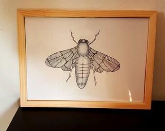 Butterfly, butterfly illustration.