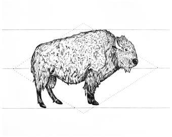 Buffalo Print, 8x10