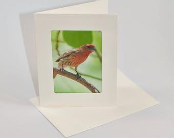 House Finch - Folded photo frame card
