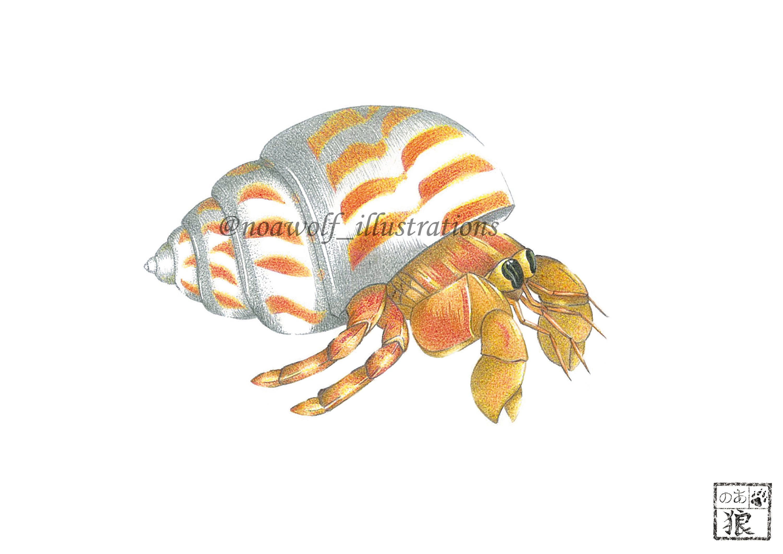 Hermit Crab art Crab drawing Crab Painting Crab artwork Hermit Crab Art