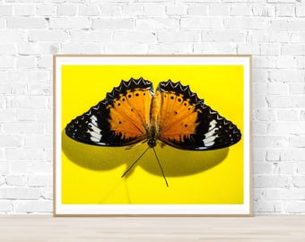 Vivid Butterfly Print |  Butterfly Printable Art |  Instant Download |  Butterfly Photography | Butterfly Art | Yellow Print