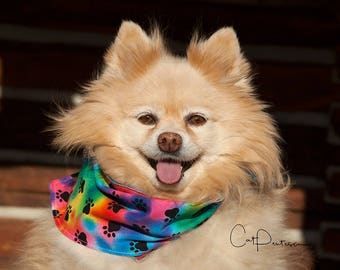 Dawgdana Dog Bandana Canine Scarf Puppy Animal Clothing Bright Red Blue Green Black Orange Unique Fun Accessory Accent Colorful Original USA