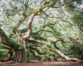 Angel Oak, John's Island, SC