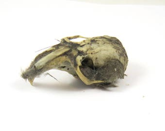 Rodent Skull from Owl Pellet Remains, Natural Find, Fur, Teeth, Creepy Specimen, Bone Eye Sockets