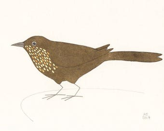 Bird art - Blue rock thrush - Female - Small original illustration on paper - Limited edition (30)