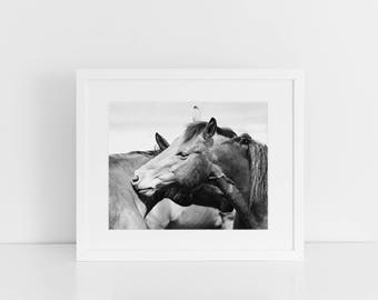 Black and White Horse Photography, Rugged Western Horses, Horse Art, Physical Print