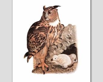 "Owl Wall Art, Baby Owls Print (Cottage Bird, Home Wall Decor) ""Bubo Maximus"" 19th Century Artist"