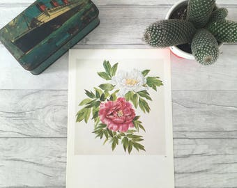 Floral art print, pink and white peonies, nature inspired art, nature art, plant picture, dorm decor, plant poster, plant art, pretty floral