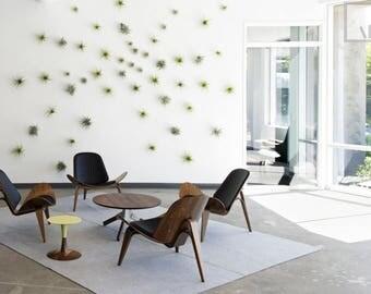 Air Plants Wall Display KIT Includes: 5 Tillandsias Air Plants + 5 Air Knots + Gift Box. Air Plant Holder Terrariums Decor Assorted Colors
