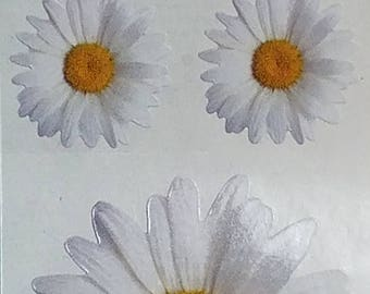 StickyPix Stickers 5 Images Per Sheet Daisies Scrapbooking