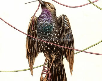 Amor Fati - illustrated art print, bird art, bird watercolour, nature art, seemingly by magic