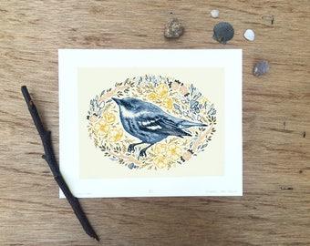 """Bird Illustration Print, Bird Scientific Illustration, Bird Specimen Illustration, 8x10"""" Giclee Print, Female Cerulean Warbler"""