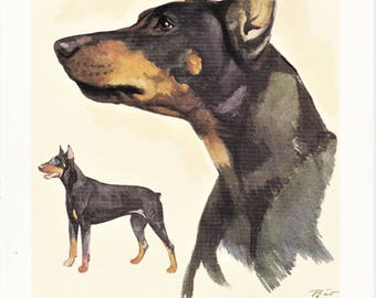 Doberman Pinscher domestic guard dog breed vintage print illustration gift for dog lover owner portrait by Willy E. Bär  8x11.5 inches